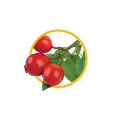 Плоды шиповника коричного