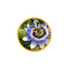 Трава страстоцвета (Пассифлора)