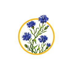 Цветки василька синего