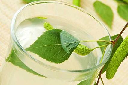 Экстракт листьев березы
